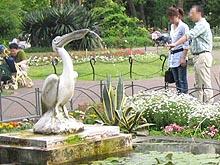 Pelicannohunsui